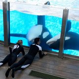 news-national-20110330-US.SeaWorld.Death