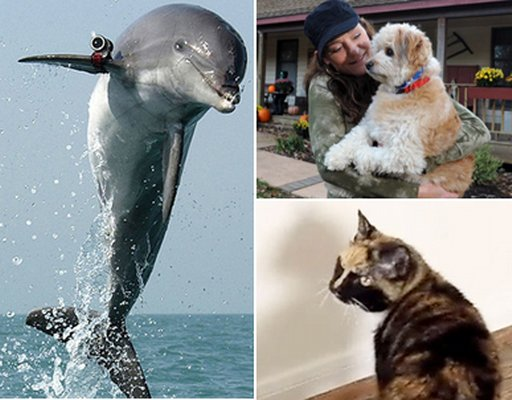photos of heroic animals