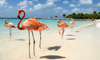 Save Big on Aruba Vacation Packages