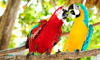 Save Big on Costa Rica Vacations