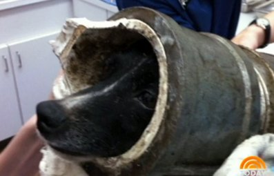 Play Dog Gets Head Stuck in Pipe Free Online