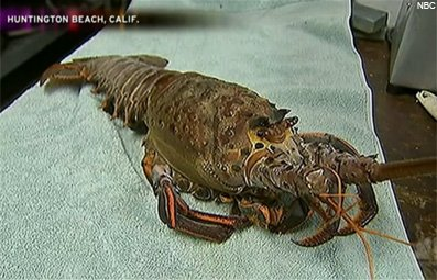 Play Huge 18-lb. Lobster Caught Free Online