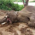 AS--Thailand-Elephant Killed