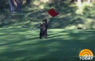 Play Bear Spins Around Golf Flag Free Online