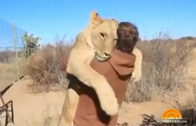 Play Lioness Jumps into Man's Arms Free Online