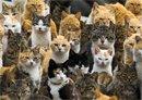 Kitty Paradise?