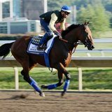 American Pharoah has final Haskell tuneup