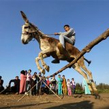 AP PHOTOS: Jumping donkey leaps to fame in Egyptian village
