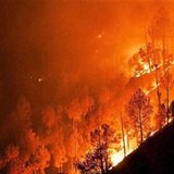 Wildfires sweep through mountain forests in north India