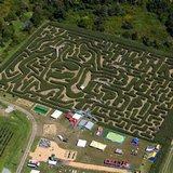 A corny tribute: Red Sox slugger immortalized in corn maze