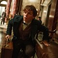 US--Film-Fall Preview-Fantastic Beasts