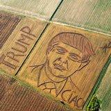 Artist mows giant Trump portrait in Italian cornfield