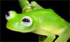 New Species Resembles Kermit