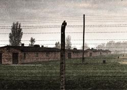 'Auschwitz'