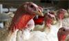 Can You Catch Bird Flu?
