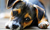 What's the Best Dog Breed for You?