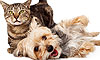 10 Cat-Friendly Dog Breeds