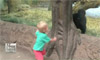 Toddler, Gorilla Play Peek-a-Boo