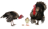 What Bird Flu Means for the Holidays